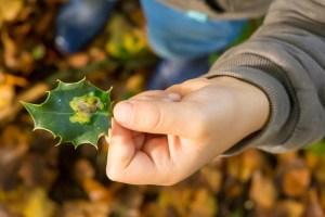 Lees meer over het artikel Week van de plantengallen