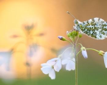 Natuurfotografen proberen altijd met de mooiste beelden thuis te komen.
