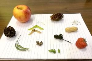 Read more about the article NGO: Naaktzadige en bedektzadige planten