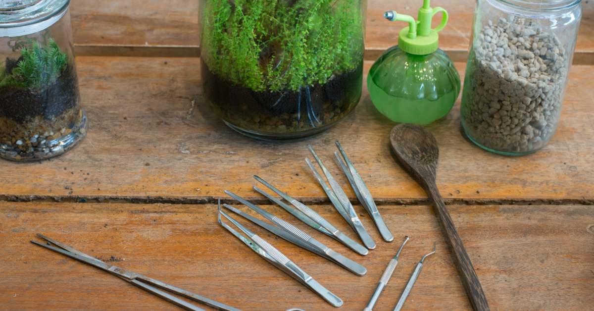 Een Terrarium Maken Voor Planten Wel Een Tuin Geen
