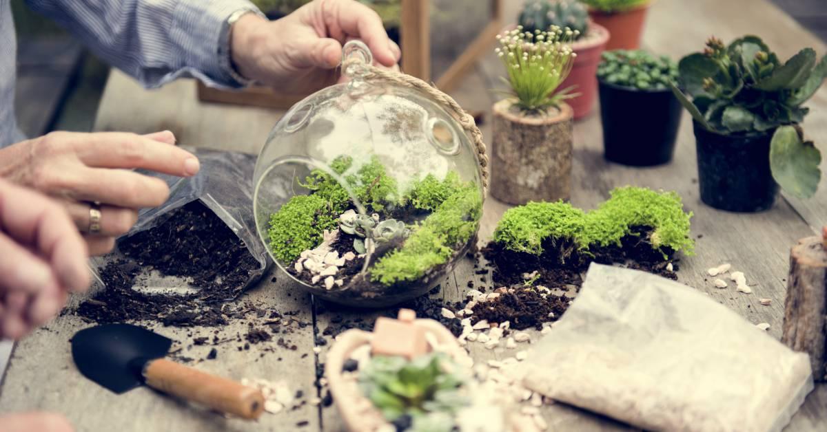 Planten Terrarium Planten  Maken  Buitenlevengevoelnl