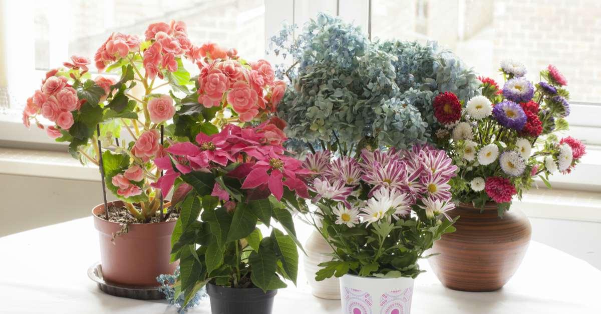 15 Bloeiende Kamerplanten Die Je Huis Kleur Geven