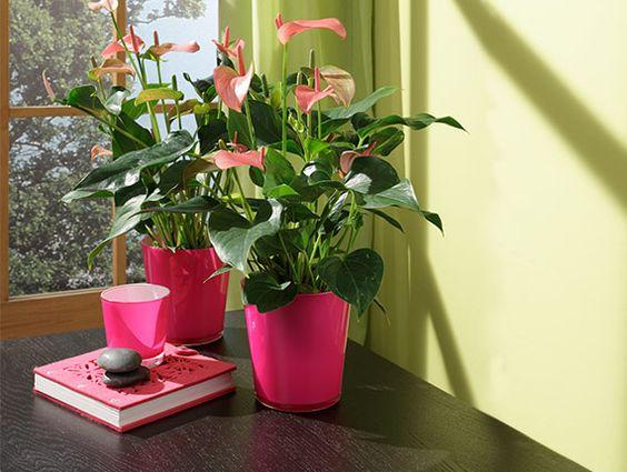 De moderne kamerplant 13 moderne planten