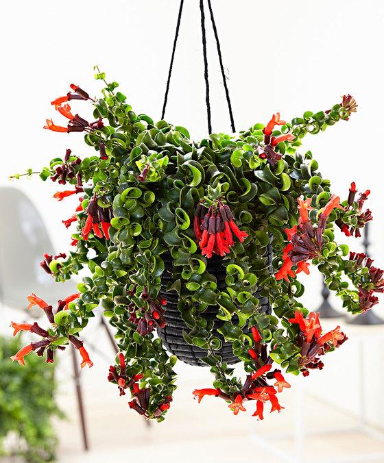 Hangplanten Voor Binnen 14x Eens Wat Anders Dan De Plant