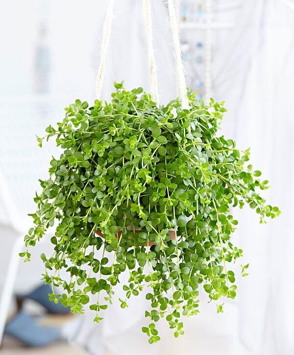 14x hangplanten voor binnen  De leukste hangplanten voor