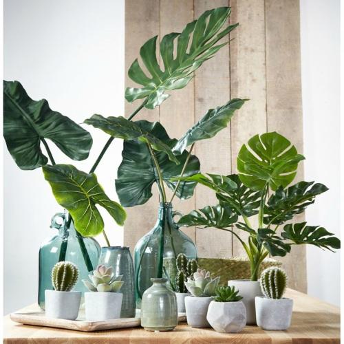 Een Cactus In Huis 39x De Mooiste Prikkelende Voorbeelden
