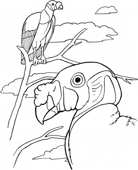 Dibujos de buitres » BUITREPEDIA