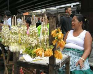 The Sweet Little Sampaguita, the Filipinos, and the Malolos 'Planta' 2