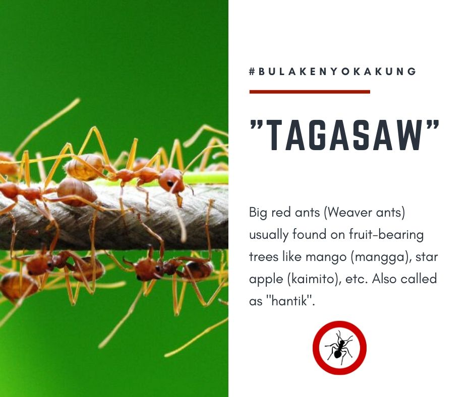 Bulakenyo Vocabularies Part 1: 'ika Nga Namin sa Bulacan! 9