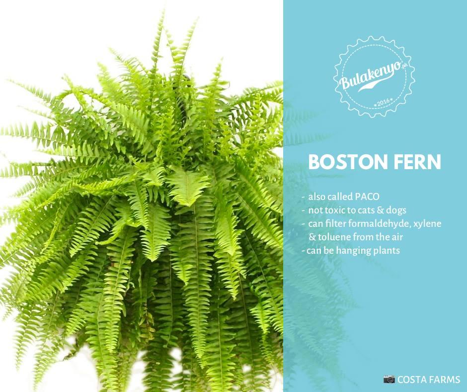 Top 7 Beautiful Indoor Plants for Plantitos and Plantitas 3