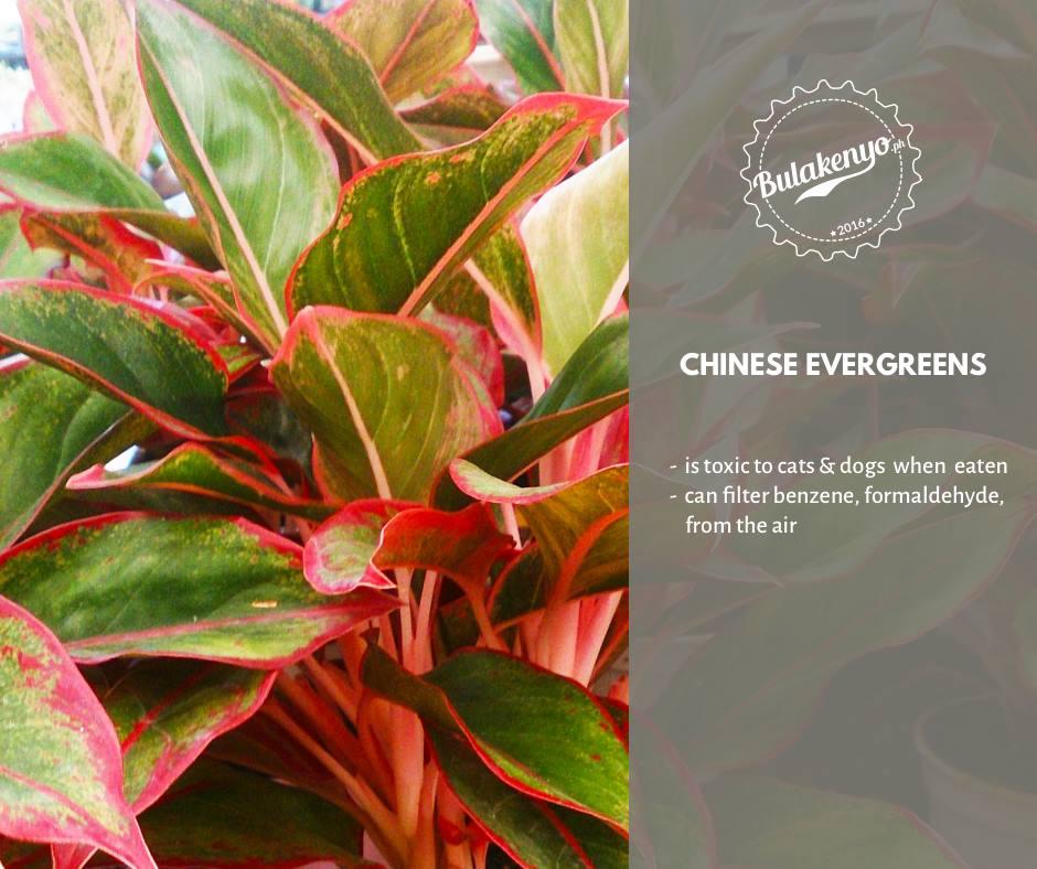 Top 7 Beautiful Indoor Plants for Plantitos and Plantitas 1