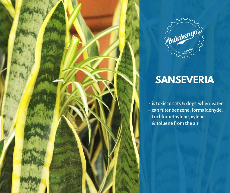 Top 7 Beautiful Indoor Plants for Plantitos and Plantitas 5