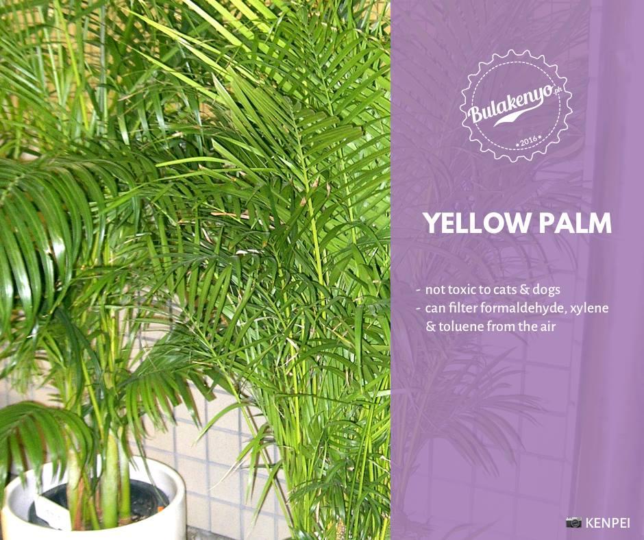 Top 7 Beautiful Indoor Plants for Plantitos and Plantitas 7