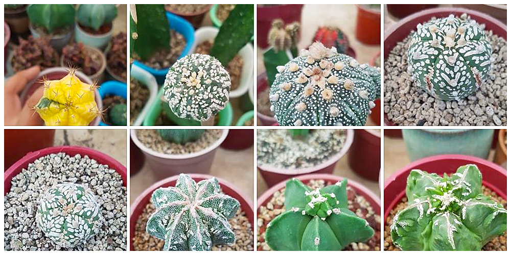 The Cactus Dojo - Cactus, Succulents and Indoor Plants in Bulacan