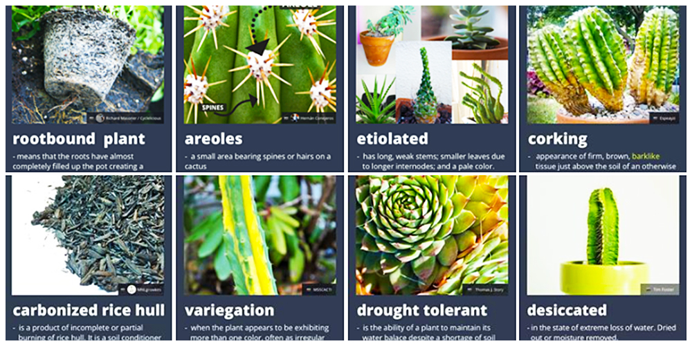 Cactulentbox sells online and one of the top resources for learning about Cacti and Succulent care. Varieties: Wide Range of Pots, Stands and Crates