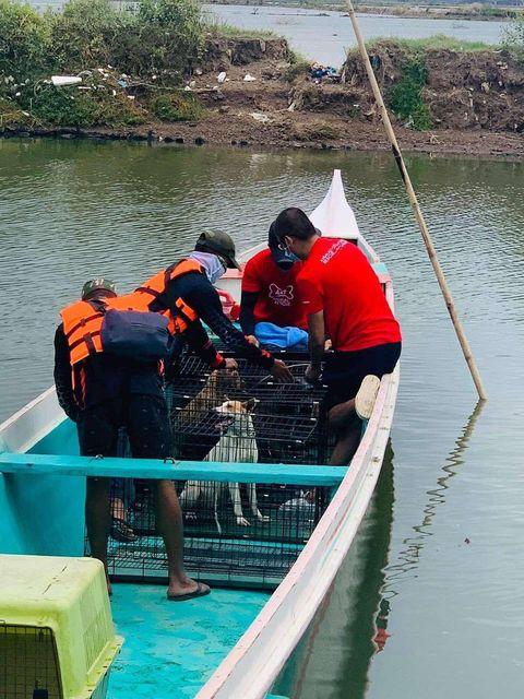 SMC, Animal Kingdom rescue abandoned animals in Taliptip, Bulakan 4