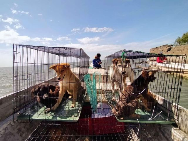 SMC, Animal Kingdom rescue abandoned animals in Taliptip, Bulakan 3