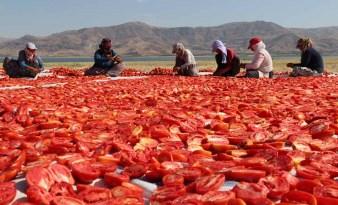 18-20 yaş arası tarım işçileri yasaktan muaf tutuldu