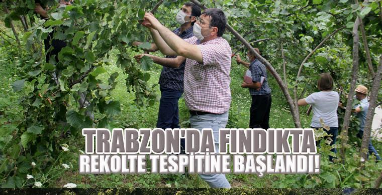 Trabzon'da Fındıkta rekolte tespitine başlandı!