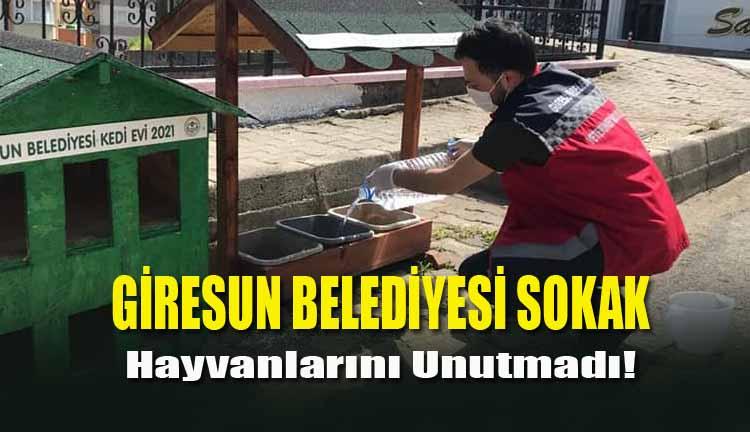 Giresun Belediyesi Sokak Hayvanlarını Unutmadı!