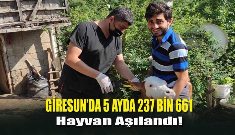 Giresun'da 5 Ayda 237 Bin 661 Hayvan Aşılandı