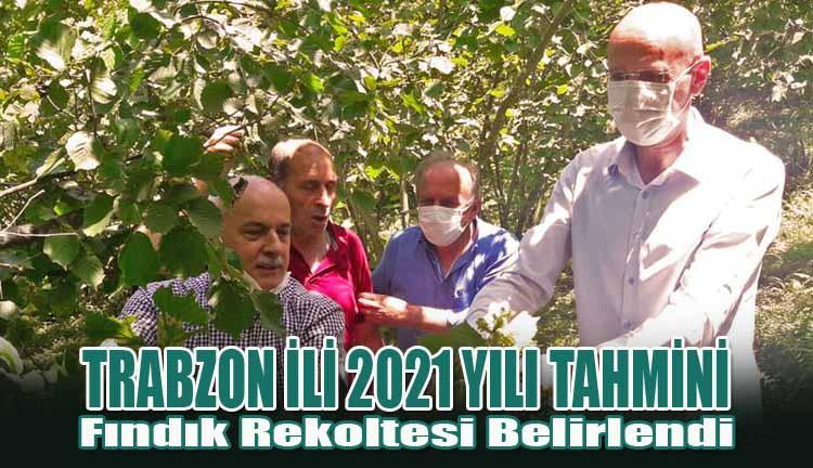 Trabzon İli 2021 Yılı Tahmini Fındık Rekoltesi Belirlendi