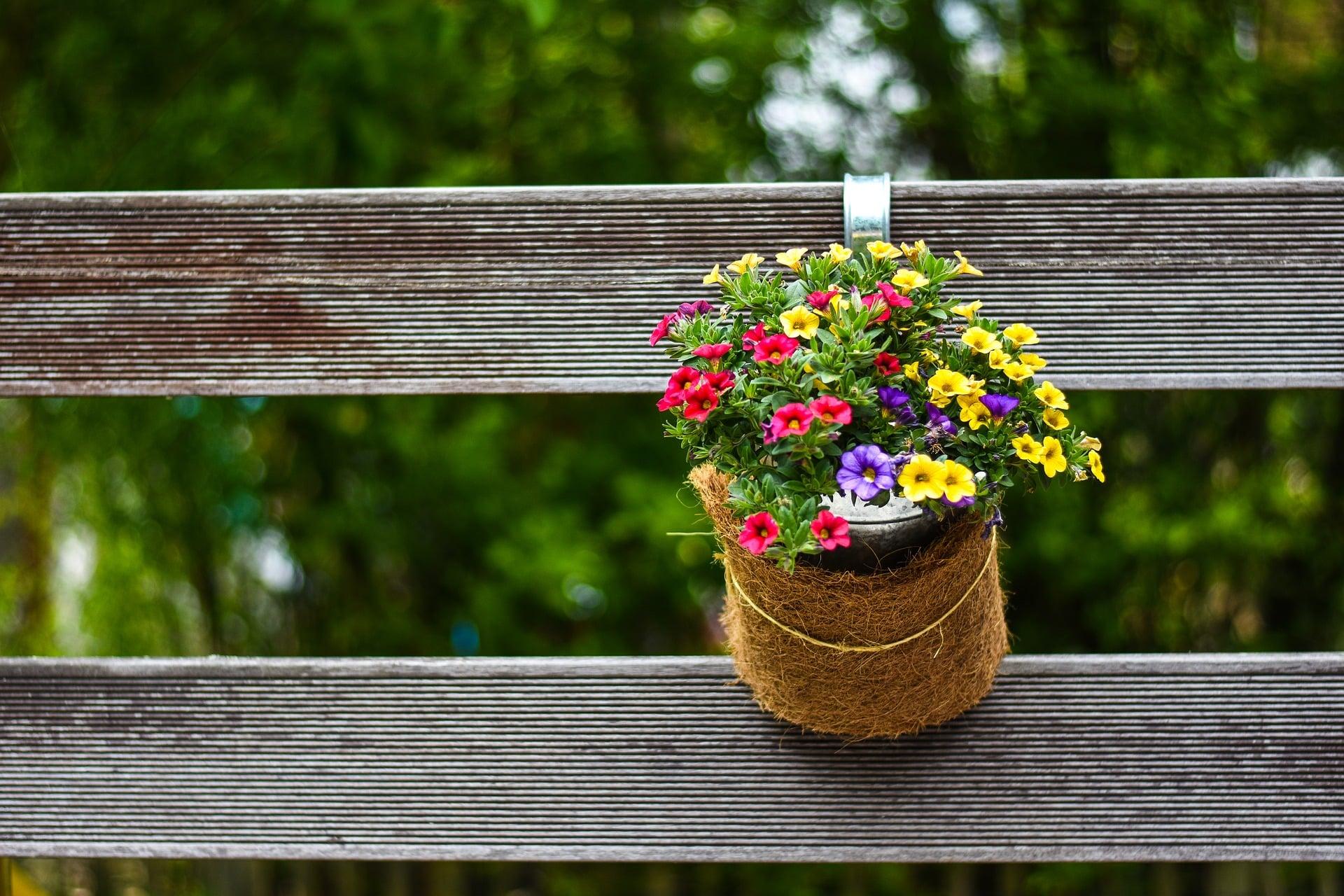 quelles plantes planter dans une
