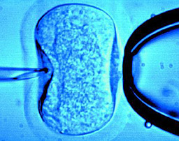Оплождане ин витро (на латински: in vitro = в стъкло), често наричано