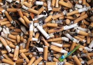 Родината на цигарите е Централна Америка. Първите данни датират от 9-ти век, когато маите и ацтеките са пушили тютюн при религиозни ритуали. Цигарите са непознати в Европа до края на 18-ти и началото на 19-ти век. Те стават особено популярни по време и след Кримската война. През втората половина на 20-ти век стават ясни отрицателните ефекти върху здравето и вредата от тютюнопушенето. Установява се, че пушенето на цигари причинява рак, сърдечни и дихателни болести и дефекти при раждането. В много страни рекламата на цигари е забранена. По данни на световната здравна организация около 1 милиард души в света пушат цигари. Процентът на мъжете пушачи е значително по-голям от този на жените пушачи. Основните вещества, които се съдържат в дима на цигарите са: въглероден двуокис, въглероден окис, никотин, азотен окис, метанол и бензол.