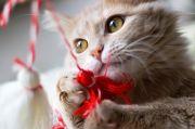 martenitsa cat