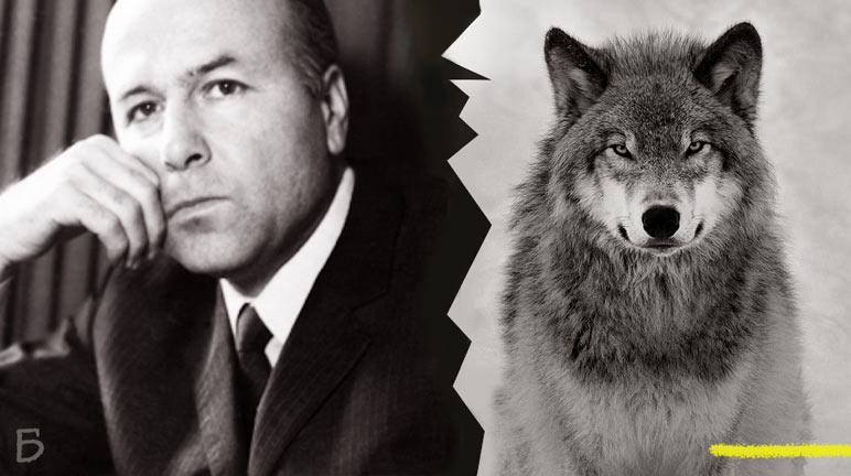 """""""Хайка за вълци"""" – Какво се случва, когато вълците се преселят от горите в душите на хората"""