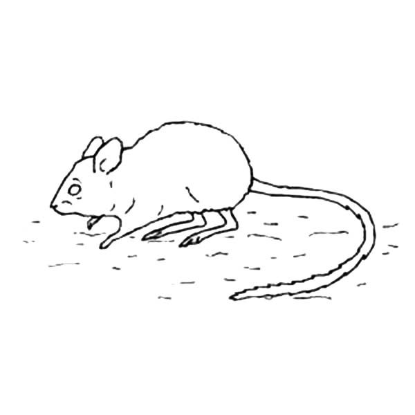 Computer Mouse Sketch Sketch Coloring Page