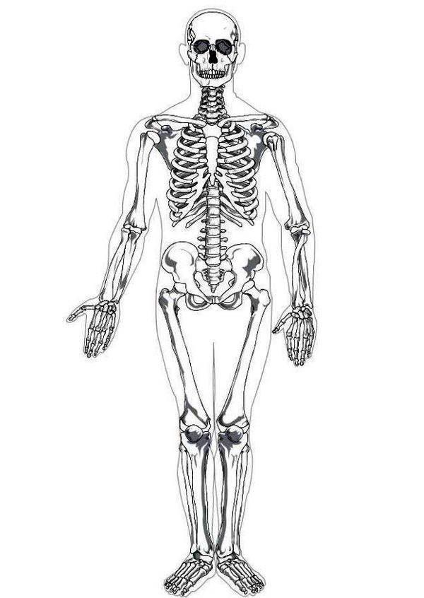 Anatomy Bone Coloring Sheet Sketch Coloring Page
