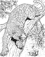 Jacksonville Jaguars Coloring Pages   Learny Kids