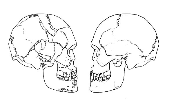 Free tooth diagram coloring pages