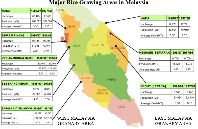 Importance of rice crop