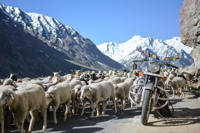 Bulleteers, Royal Enfield Riders from Gwalior, ride to Leh, Khardungla, Nubra Valley and Pangong Lake
