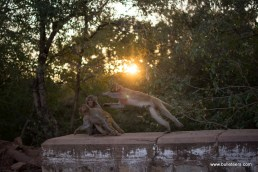Monkeys get scattered around at first when we reached Dev Kho