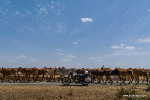 palpur-kuno-road-2581