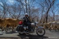 palpur-kuno-road-2646
