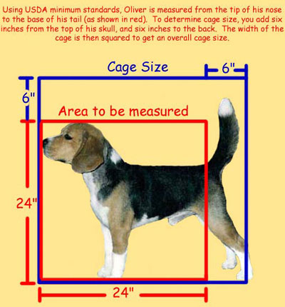 USDA Acceptable cage size for dogs
