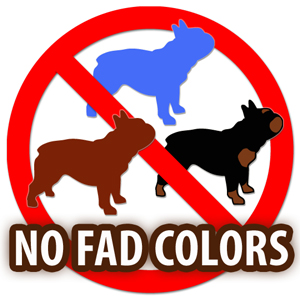 No Fad Colors for French Bulldogs