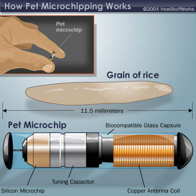 How a pet microchip works