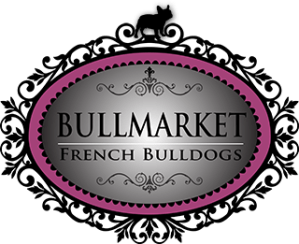 French Bulldog Breeders in Toronto Canada since 1989