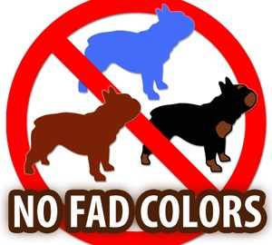No Fad French Bulldog Colors