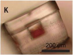 Grazie a queste microparticelle sviluppate con la tecnologia del 3D printing sarà molto più facile vaccinare i bambini