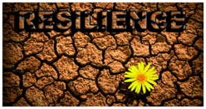Workplace Bullying Inspiration: Resilience & Responsibility