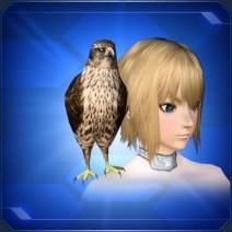 肩乗り茶鷹 Perched Brown Falcon