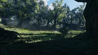 Resol Forest B