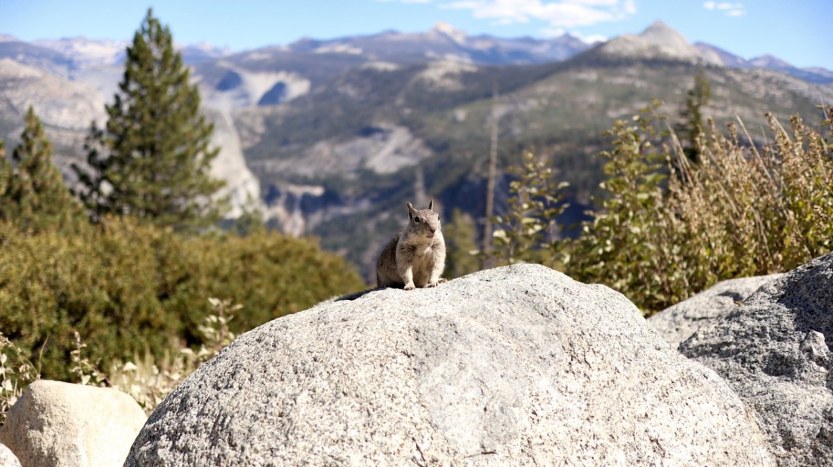 Zwei tolle Tage im Yosemite National Park